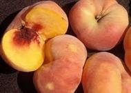 Персик инжирный Свит Багел
