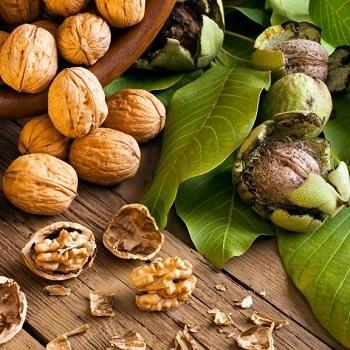 Грецкий орех Буковинский