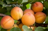 Априум (абрикос-слива) Флэйвор Делайт/Flavor Delight