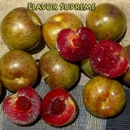 "Плуот (слива-абрикос) ""Flavour Supreme"" (средний)"