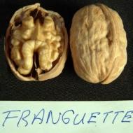Грецкий орех Франкет (Franquette) Франция