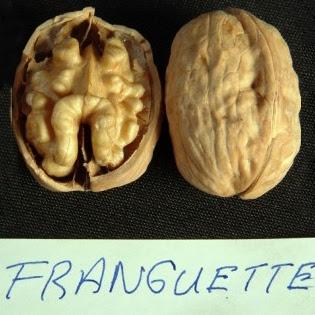 Грецкий орех Franquette (Франкет) Франция