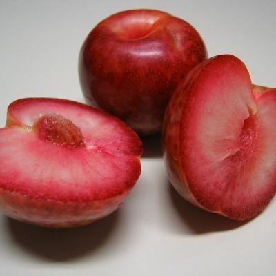 Плумкот (слива-абрикос) АЛЕКС