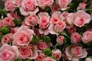 Роза бордюрная, спрей Грация