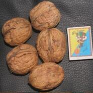 Грецкий орех крупноплодный Черновицкий