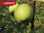 Яблоня Грин Схем (зимнее)