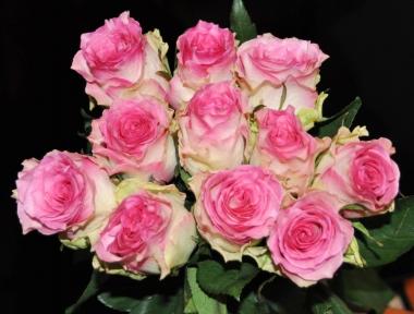 Роза чайно-гибридная Малибу
