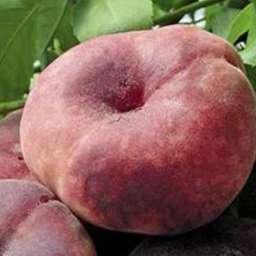 Персик инжирный Никитинский