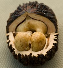 Чёрный орех