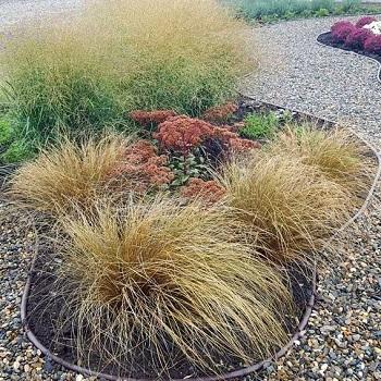 Осока власовидная Bronze Form \ Carex comans bronze form