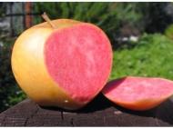 Яблоня Пинк Перл (розовая жемчужина)