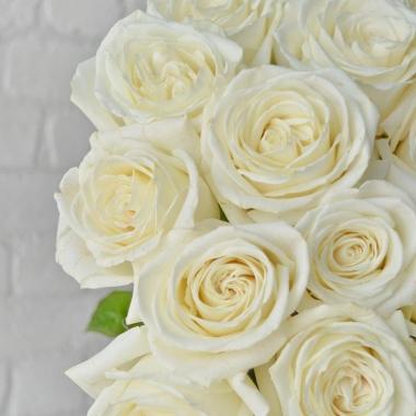 Роза пионовидная  Вайт Охара