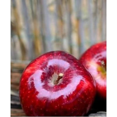 Яблоня Розела (летнее)