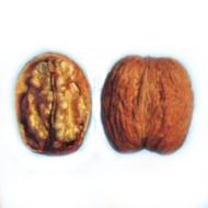 Грецкий орех Рудковский