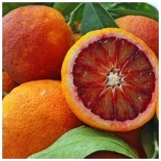 Дерево - сад апельсин красномясый Россо + лимон Киевский крупноплодный