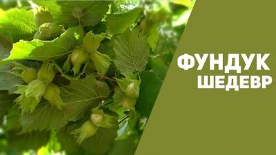 Фундук Шедевр