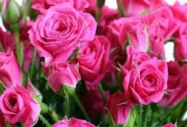 Роза Спрей Малиновый