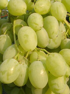 Виноград Восторг идеальный
