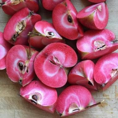 Яблоня красномясая Розетта